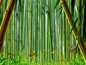 bamboo uses