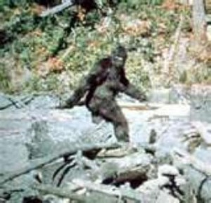 sasquatch-proof