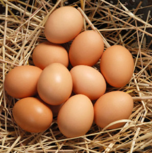 eggs-made-from-plants
